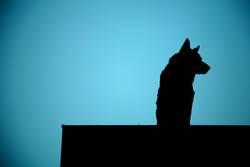 wachhund vom dach