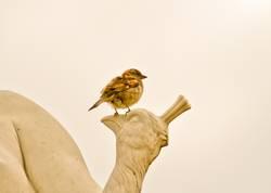Ein kleiner Spatz sitzt auf einer Vogelstatue