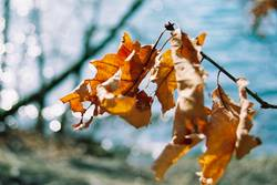 Blätterrascheln