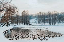 Enten und Seagull Birds auf gefrorenem See im Winter
