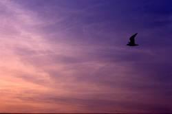 Vogel vs. Himmel