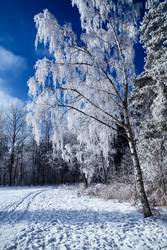 Das letzte Winterfoto