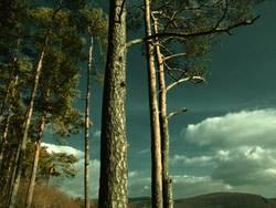 Da wo der Wald beginnt