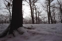Winterwald I