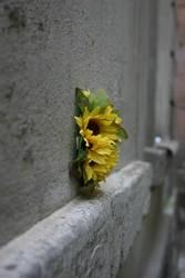 Blume_auf_Prager_Hauswand