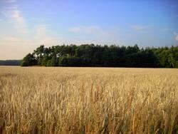Feld&Wald