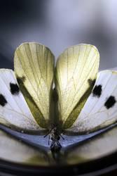 Schmetterlingsyoga mit Herz