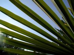 Palmen Perspektive