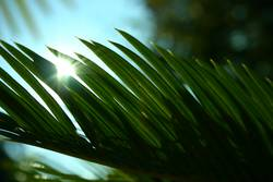 palm palm palme...