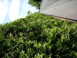 Die grüne Straße