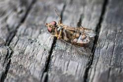 Der langsame Tod des Herrn Insekt