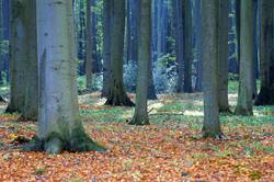 Gespensterwald I