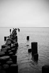 Die alte Ente und das Meer