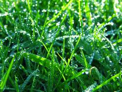 Grünes Gras Blaues Glas