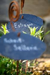 kräutergarten - urban-gardening