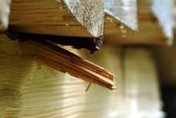 Holzsplitter