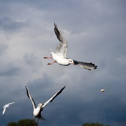 Der schnellere Vogel fängt das Brot