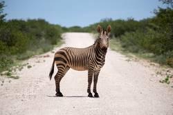 ich bin dann mal ein zebrastreifen.