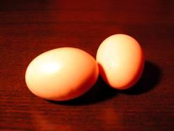 eier :: eier