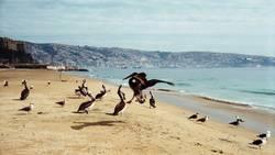 Pelikane am Strand von Valparaiso