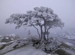 beschneiter Baum