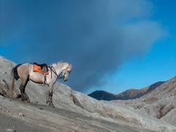 Vulkanpferd