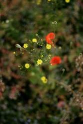 grün gelb und rot
