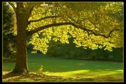 schon mal etwas Herbstliches....