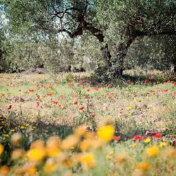 Blümchen und Oliven