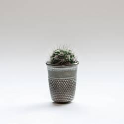 mini mini kaktus