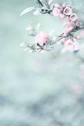 quitten in bloom