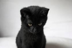 mein kleiner schwarzer kater