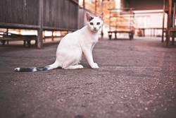 citycat