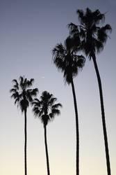 4 palm trees