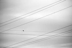 9 lines and a bird