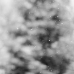 snow. in the falling.