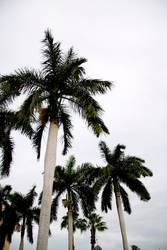 palmen.