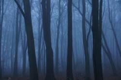 Wer hat Angst im dunklen Wald?