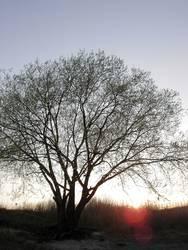 Baumsiluette im Frühjarssonnenuntergang