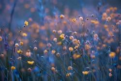 Nachts sind alle Blüten gelb