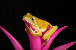 Treefrog Entspannung