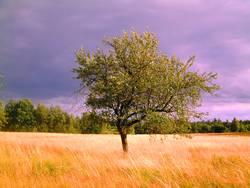 Der Baum.