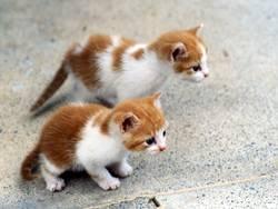 kleine Raubtiere