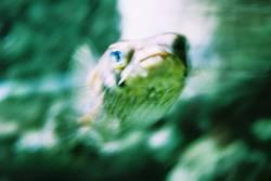 Vorsicht vor dem Fisch