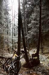Der Bock im Wald (II)