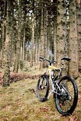 Der Bock im Wald (I)