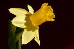 gelbe verführung