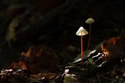 Laternen im Wald