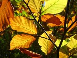 .. und noch ein paar Blätter