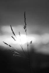 Florale Halme gestreift von Horizont küssender Sonne